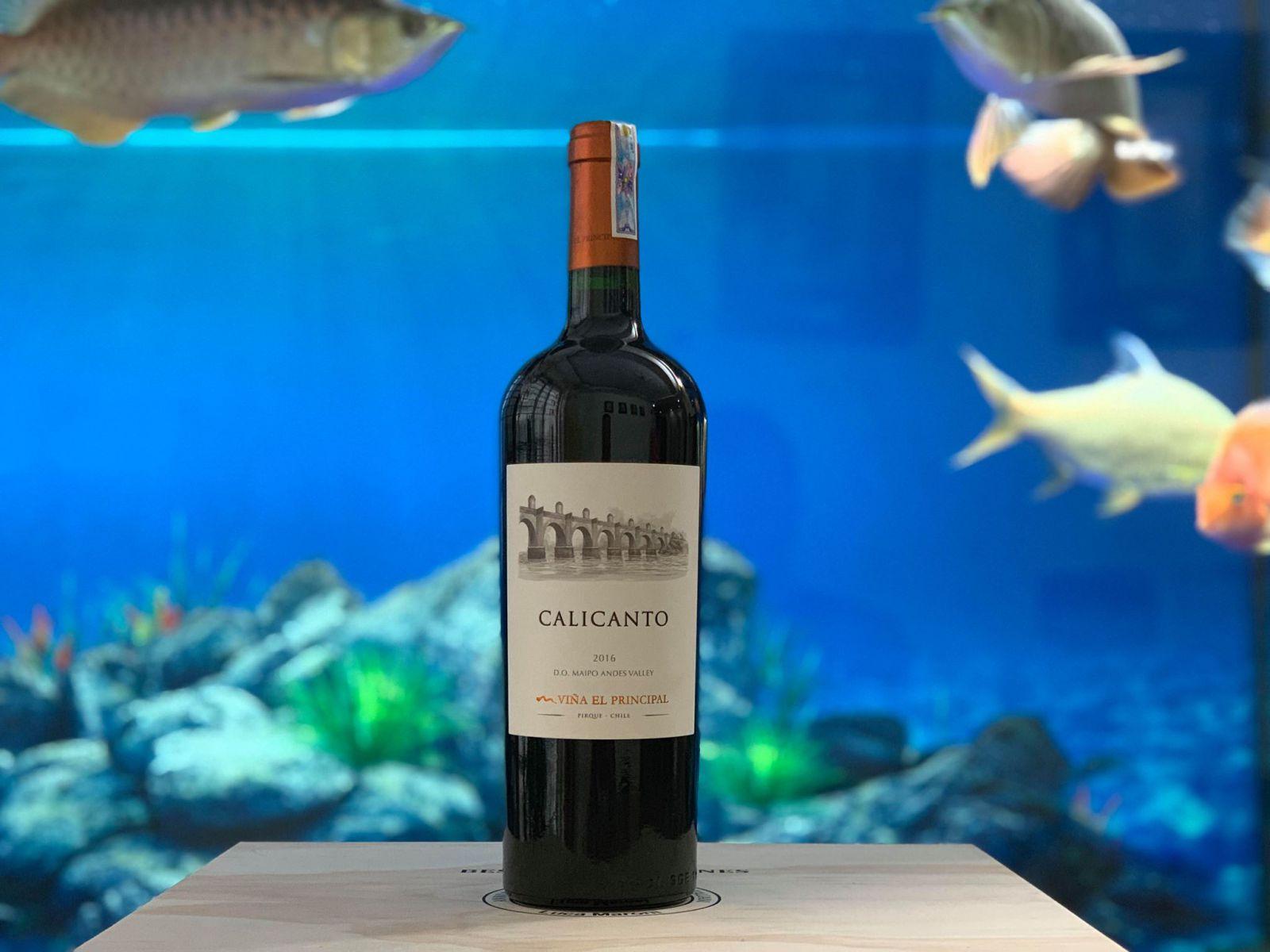 Rượu vang Chile cao cấp Calicanto